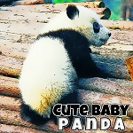 تركيب صور الباندا